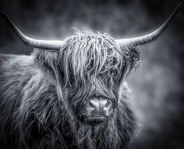 Schottischer Highlander in Schwarz und Weiß von Marjolein van Middelkoop
