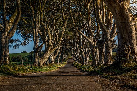 Dark Hedges / Donkere Hagen  - Noord Ierland van Dennis van Berkel