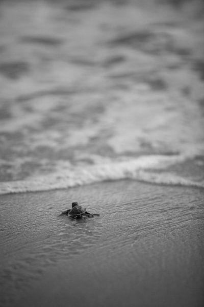 Schildpad van Catching Moments