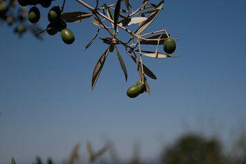 Olive tree von Marco de Groot