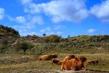 Les Highlanders écossais sur Jos Krick Photography