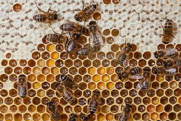 Honingbijen op hun raad met honing van Joost Adriaanse