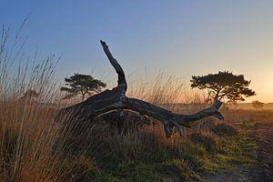 Dode boom brengt omgeving tot leven