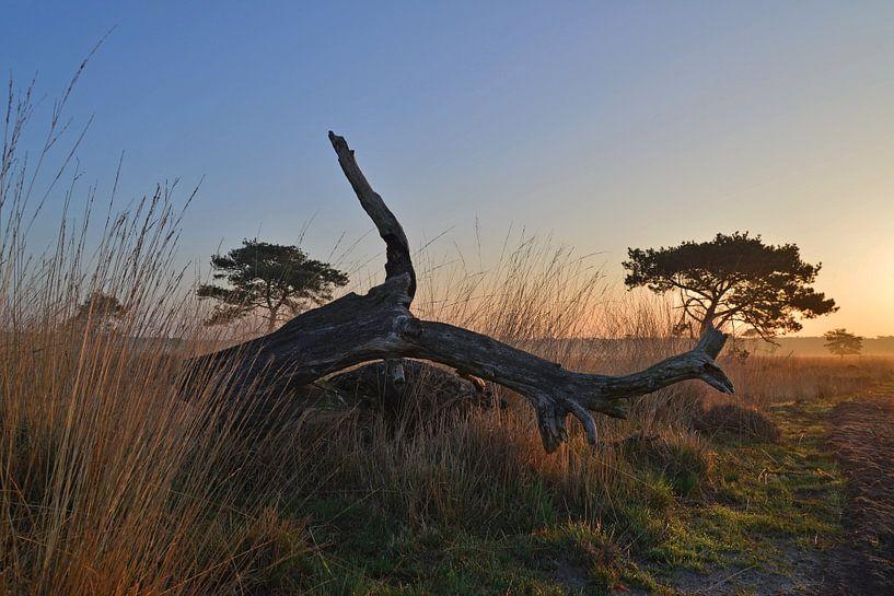 Dode boom brengt omgeving tot leven sur Arjan van Roon