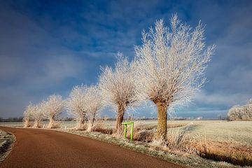 Niederländischen Polder im Winter von eric van der eijk