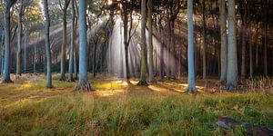 Rayons de soleil dans la forêt sur Martin Wasilewski