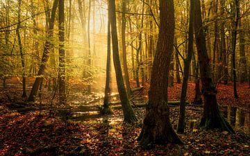 Sumpf Schönheit von Joris Pannemans - Loris Photography