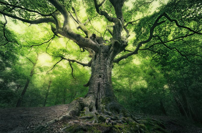 Heksenboom van Rob Visser