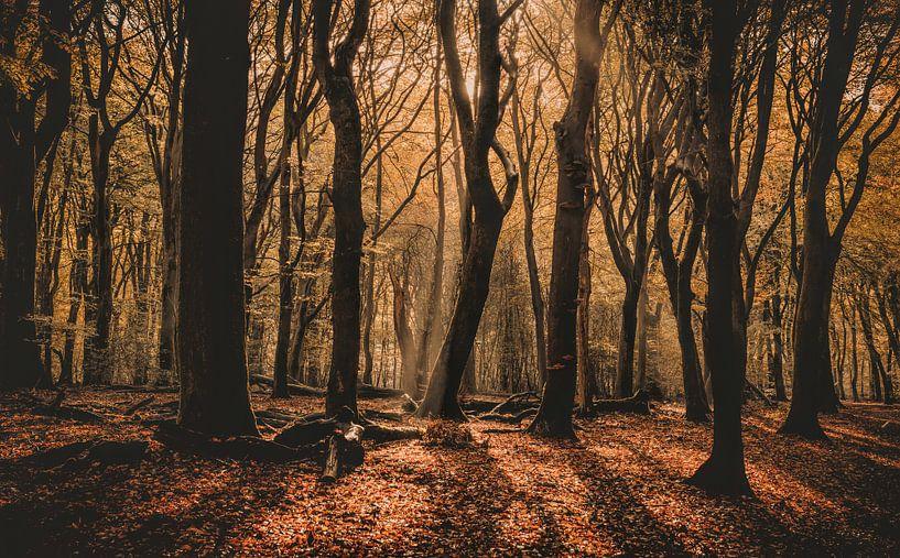 Mysterieuze ochtend van Joris Pannemans - Loris Photography