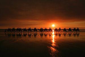 Kamelenrit tijdens zonsondergang