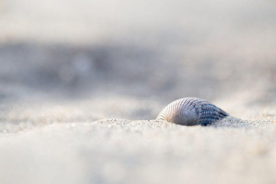 Schelp  op het strand van Judith Borremans