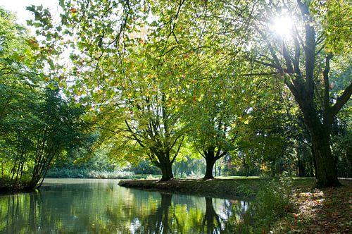Herfstochtend in het park