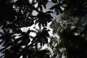 Palmentuin Suriname van Chantal de Rooij