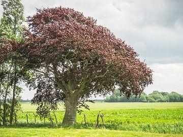 Rode boom van Martijn Tilroe