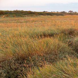 Grassen kleuren de Schorren goud in het vroege ochtendlicht van Marijke van Eijkeren