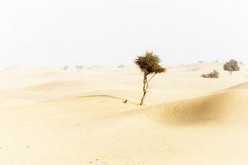 Woestijn (Abu Dhabi) von Coby Zwartbol