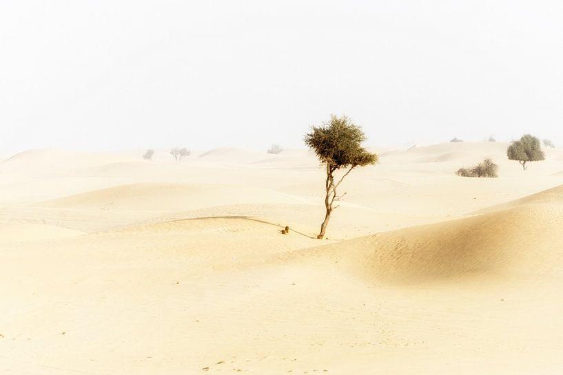Woestijn (Abu Dhabi) van Coby Vriens