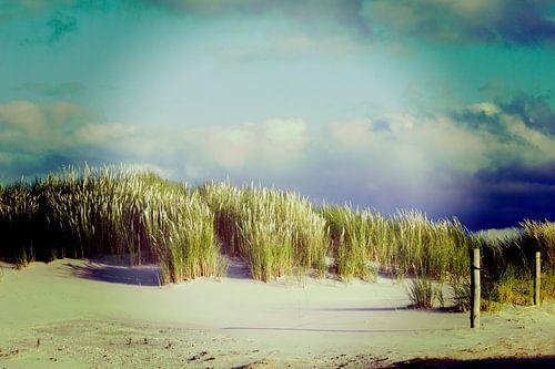 Duinen Ameland 2015