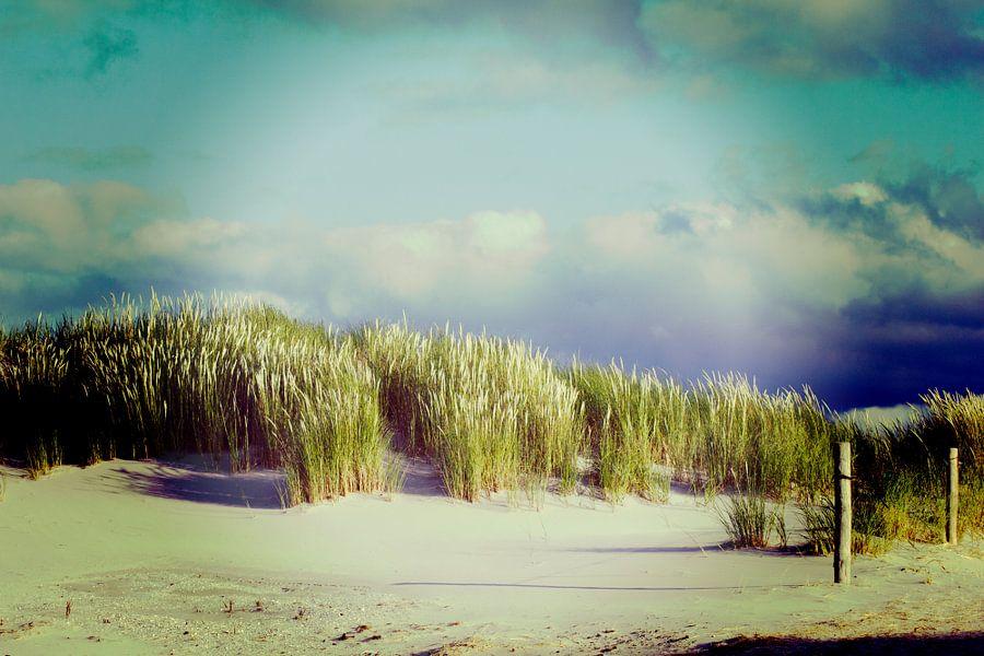 Duinen Ameland 2015 van John ten Hoeve