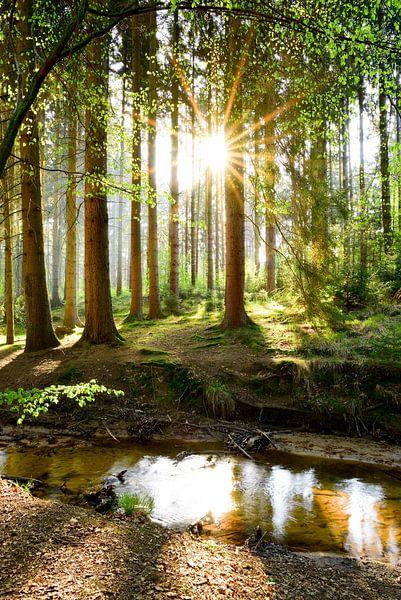Idyllisch bos in het voorjaar van Günter Albers