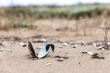 Schelp op strandje Merwede van