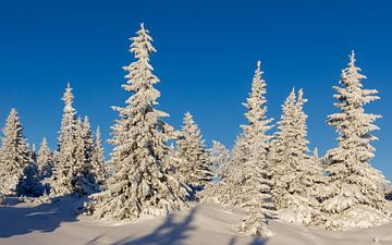 Besneeuwde bomen, Noorwegen van Adelheid Smitt
