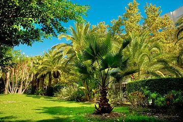 Park met palmen en een blauwe lucht in Spanje.
