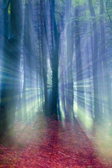 Sprookjesachtige weergave van een herfst bos in de mist.