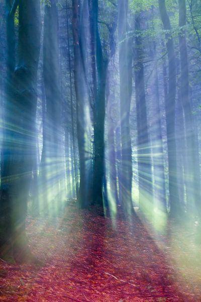 Sprookjesachtige weergave van een herfst bos in de mist.  van Mark Scheper