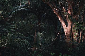 Das Licht leuchtet auf den Baum von Felix Van Leusden