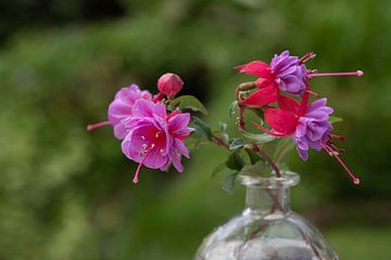 Garten fuchsienrot mit hartem rosa Herz von Gaby Hendriksz