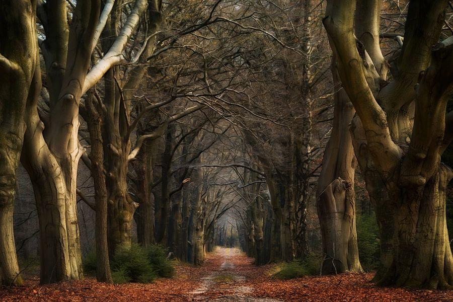 The Old Lane