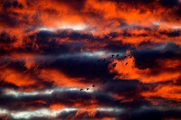 vliegende ganzen van Ronald Jansen