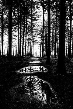 Wald schwarz und weiß von Wouter Krom