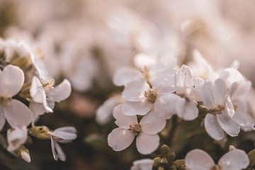 Blumen Teil 78 von Tania Perneel