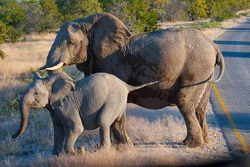 Olifanten familie van