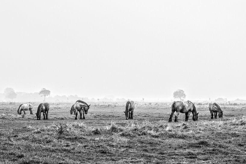 Horses in the polder van Wessel Krul