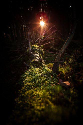 Sunshine woods van