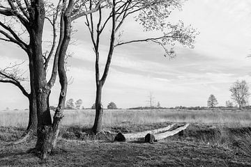 Balloërveld, Drenthe, Holland. von Aukelien Minnema