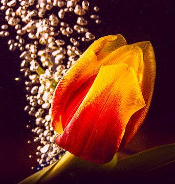 flux de tulipes sur natascha verbij