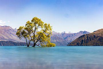Der Wanake-Baum von Jurgen Buijsse