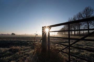 Hek in weiland van Moetwil en van Dijk - Fotografie