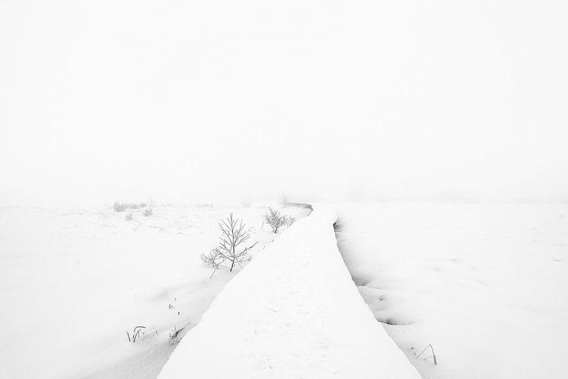 Walking in to a white world van Davy Sleijster