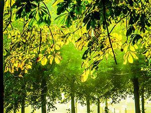 Kastanjebladeren in tegenlicht met fietser van