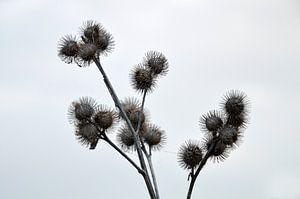Natuur in zijn eenvoud van Gwen Laremans