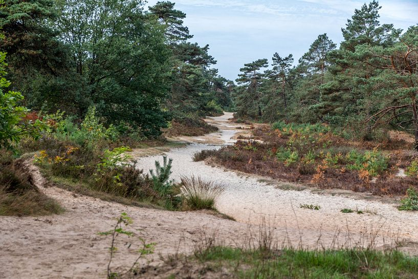 Duinpad in Drents-Friese Wold van Jaap Mulder