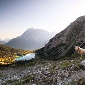 moutons avec agneaux en haute montagne au lac au lever du soleil sur Olha Rohulya