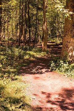 Lage Bergse Bos - Sonnenweg Nr. 1 von Deborah de Meijer