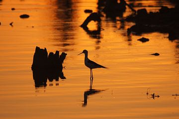 Sonnenuntergang Afrika von Herman van Egmond