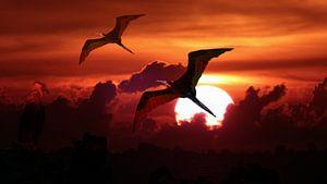 Fregat vogels tegen ondergaande zon van